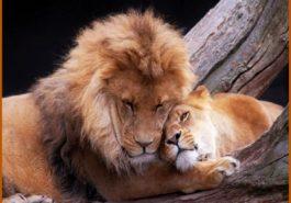 La pareja ideal de Leo